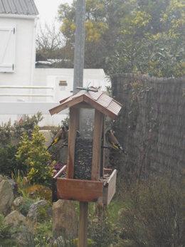Avez-vous installé un mangeoire pour les oiseaux ?