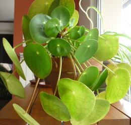 Connaissez vous le nom de cette plante verte?