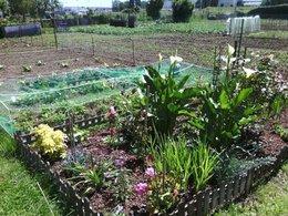 Comment protéger le jardin contre le froid ?
