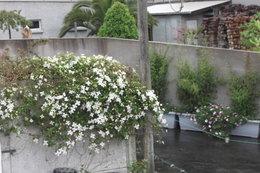Aujourdui que faite vous dans votre jardin