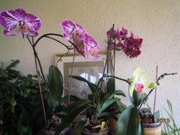 soin orchidée