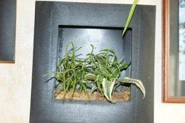 Plantes grasses : des conseils ?