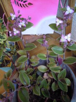 Le nom de cette plante?