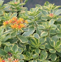identification de cette plante