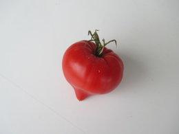 tomate balcon