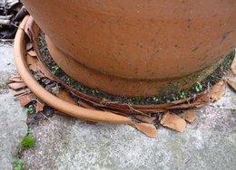 Dégâts du gel sur les poteries