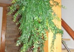 Plantes inconnues
