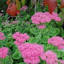 Identification fleurs