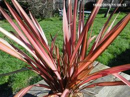 quel est le nom de cette plante