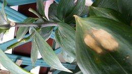 3 plantes qui me semble malades