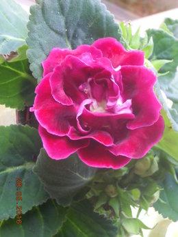 nom de fleurs