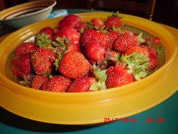 Quel fraisier