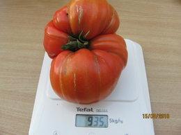 plans de tomates