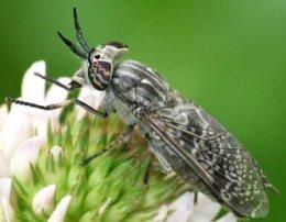 Piqure insecte?