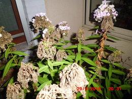 qui connait le nom de cette plante
