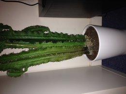 cactus en péril