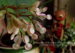 Une plante d'intérieur à identifier