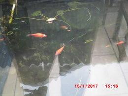 Bassins et Étang au Jardin Aquatique - Mes projets idées