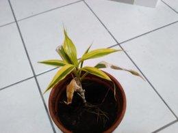 Nom d'une plante d'intérieur pour améliorer son entretien