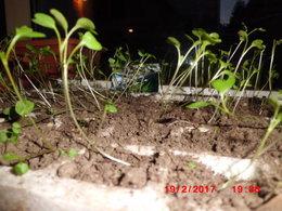 semis qui filent