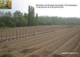 Plantation des tomates, aubergines, poivrons et piments