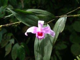 orchidée je pense