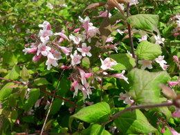 Trouver le nom de ces fleurs