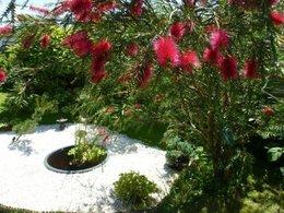 Un coin japonais dans mon jardin
