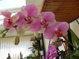 Les Orchidées autrement !