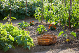Que signifie le jardinage bilogique