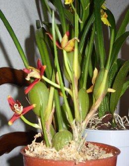 La bible à photos : photos d'orchidées