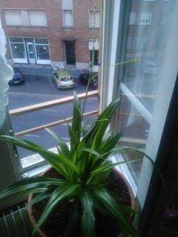 quel est le nom exact de cette plante vert  qui fleurie