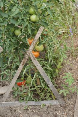 tuteurs en fer pour tomates