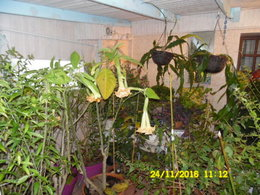 batouran  photos de mes plantes et arbustes