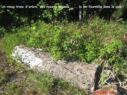 22 Mai   Journée Mondiale de la Biodiversité