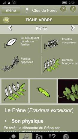 Identification mauvaise plante