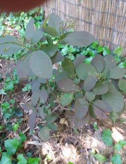 Plantes qui peut me dire ce que c'est ...