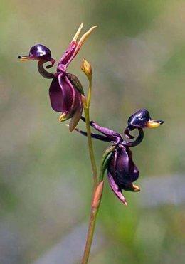 Est ce 1 orchidée ?
