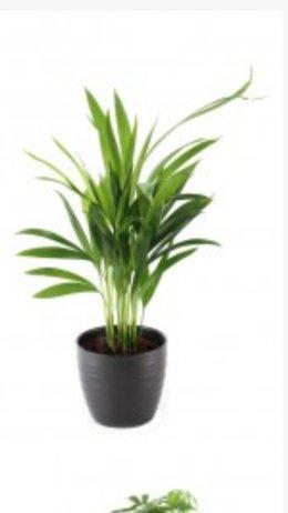 Quelle est cette plante?
