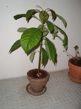 Identification de plante