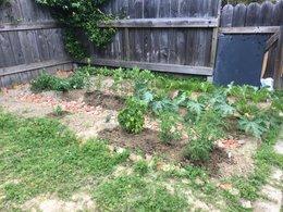 Jardinier en herbe, je me suis inscrit pour avoir des conseil avant de débuter mon potager