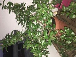 Connaissez-vous cette plante ?