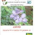 Marché aux fleurs et aux plantes (OLIVET, 45)