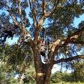 Activité famille : Grimpez dans les arbres (RAYOL CANADEL SUR MER, 83)