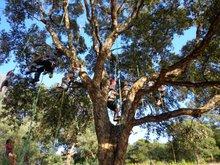 Activité famille : Grimpez dans les arbres