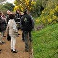 Visite thématique : LOdyssée des mimosas (RAYOL CANADEL SUR MER, 83)