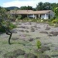 Atelier formation : Graminées, couvre-sols et gazons alternatifs (RAYOL CANADEL SUR MER, 83)
