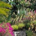 Atelier formaiton : Créer son jardin en méditerranée (RAYOL CANADEL SUR MER, 83)