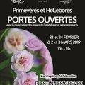 Weekend portes-ouvertes Barnhaven Primroses, les spécialistes des primevères (PLESTIN-LES-GRèVES, 22)