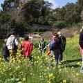 Visite thématique : Les plantes sauvages comestibles (RAYOL CANADEL SUR MER, 83)